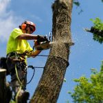 What are the Different Types of Tree Trimming Techniques?